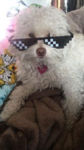 "Vk5Rx16sV 169x300 - ""Thug life"" Pixel Sunglasses"